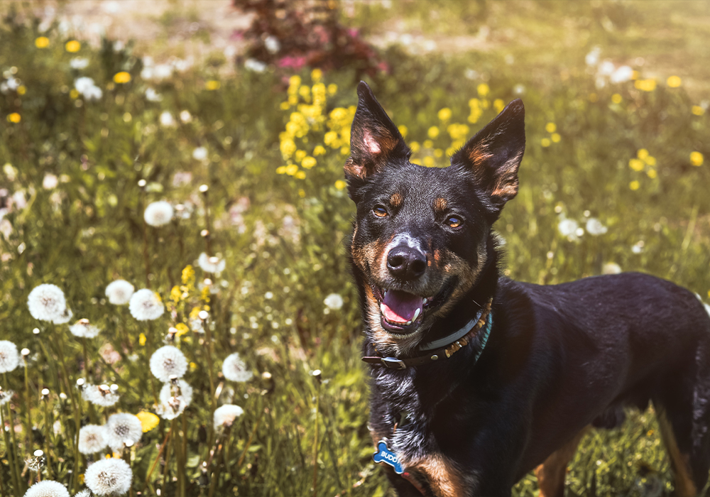 The Humane Society Of Chilton County Pet Adoption