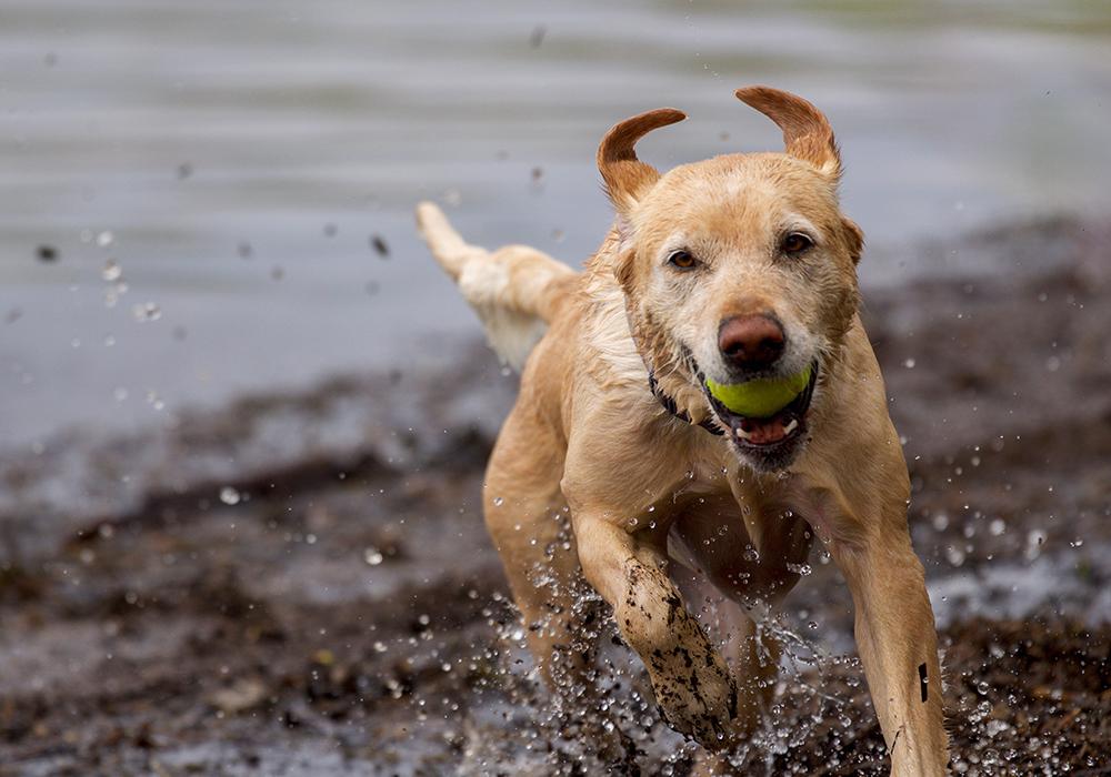Pet Adoption Humane Society Of Chilton County Pet Adoption